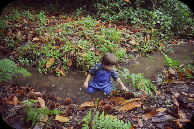 Descubriendo el otoño en el bosque
