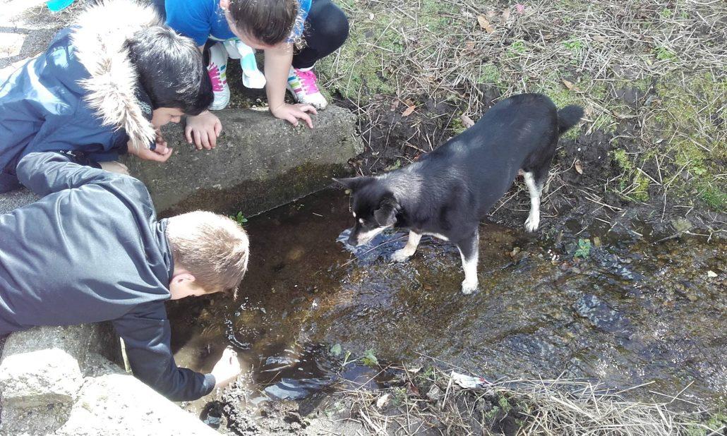 Buscando lombrices en el fango