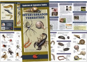 Invertebrados_cuadernos-naturaleza