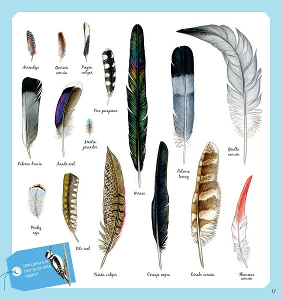 El libro de los pájaros plumas