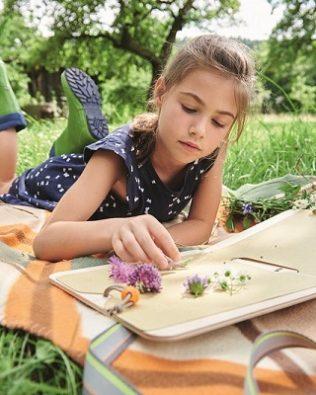 Prensa de campo para plantas y flores