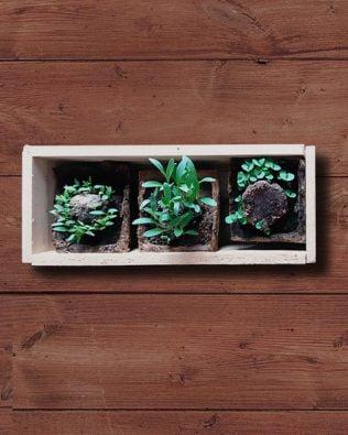 Mini huerto de aromáticas