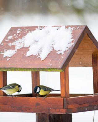 "Kit de regalo ""Conociendo las aves"""