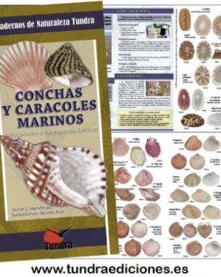 Cuadernos de Naturaleza: Conchas y caracoles marinos. Introducción a las especies ibéricas