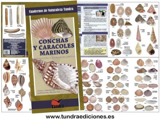 Guía conchas y caracoles marinos Tundra