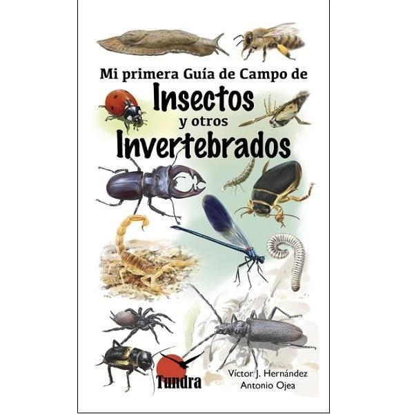 Guia insectos niños