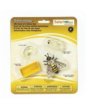 Ciclo de vida de una abeja. Safari