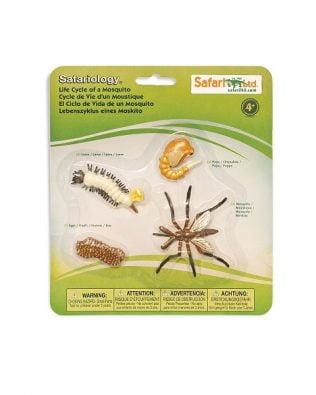 Ciclo de vida de un mosquito. Safari