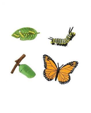 Ciclo de vida de la Mariposa monarca. Safari