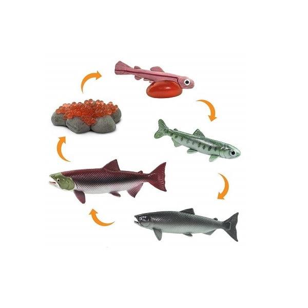 Ciclo vida salmón figuras Safari