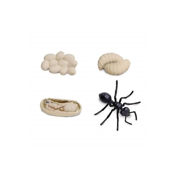 Figuras ciclo vida hormiga