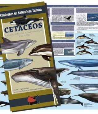 Cuadernos de Naturaleza: Cetáceos. Introducción a las especies ibéricas y Canarias