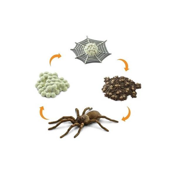 Figuras ciclo vida araña