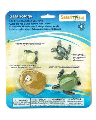 Ciclo de vida de una tortuga. Safari